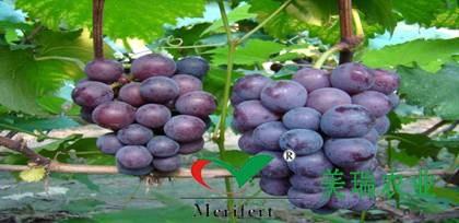 葡萄生长需要补钙吗